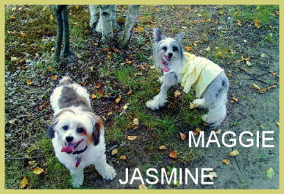maggie mae chinese crested dog jasmine