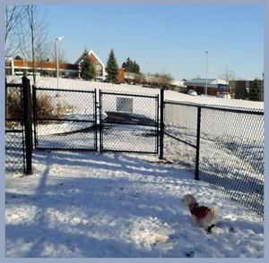 Dog parks parc a chiens aylmer ottawa gatineau hull for Club piscine gatineau circulaire
